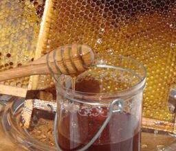 Natur wirkt - Honig